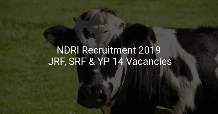NDRI Recruitment 2019 JRF, SRF & YP 14 Vacancies